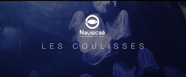 Coulisses Nausicaà